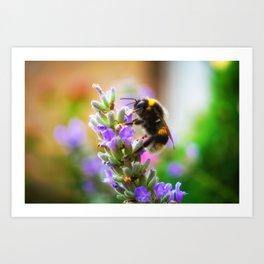 Humble Bumblebee Art Print