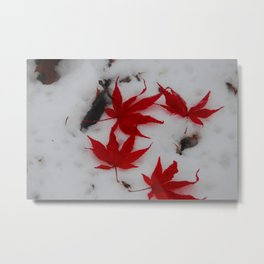 red maple on a field of snowy white Metal Print