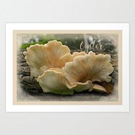 Oyster Mushroom 1 Art Print