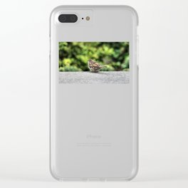 Little Feather Tasting Clear iPhone Case