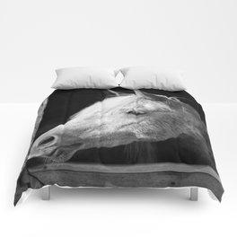 Aragon Comforters