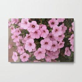 Sweet Pink Flowers (Vintage Petunias) Metal Print