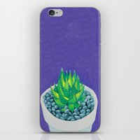 succulent iPhone & iPod Skins featuring Succulent by marlene holdsworth