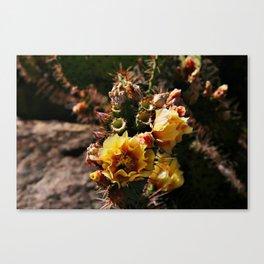 Rare exotic cactus flowers Canvas Print