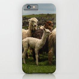 Llamita del Norte iPhone Case