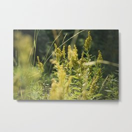 Mountain Meadows 03 Metal Print