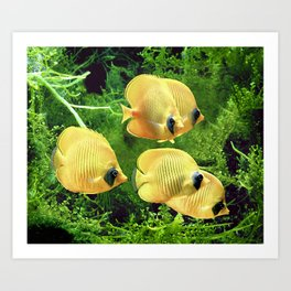 Bluecheek butterflyfish, Chaetodon semilarvatus Art Print