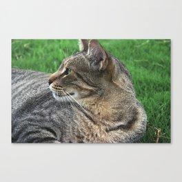 Serene Cat Canvas Print