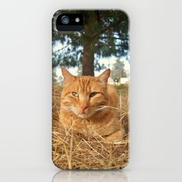 Ginger cat resting in nature iPhone Case