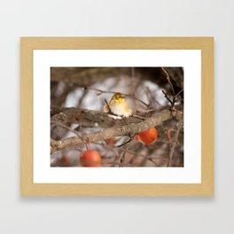 American Goldfinch in Winter Framed Art Print