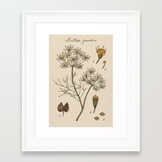 Dill Framed Art Print
