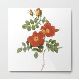 Vintage Roses [11] Metal Print