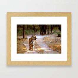 TIGER ON TRACK Framed Art Print