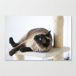 Beautiful Dreamer Canvas Print