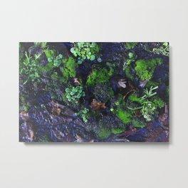 Micro Greens Metal Print