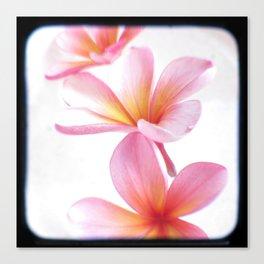 Pink Frangipani Canvas Print