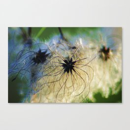 Angel Seeds Canvas Print