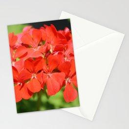 Red Geranium Pelargonium hortorum Stationery Cards