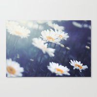 daisies Canvas Prints featuring Daisies by Kameron Elisabeth