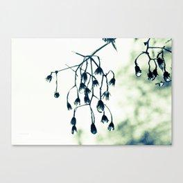 Rain drop jewels Part 1 Canvas Print