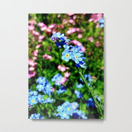 Pink And Blue Forget Me Nots Metal Print