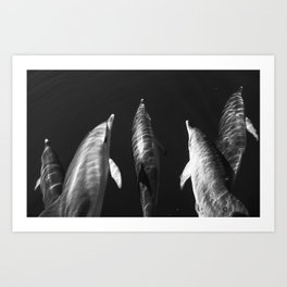 Beautiful wild dolphins black and white Art Print