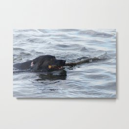 Black Retrieving Stick Metal Print