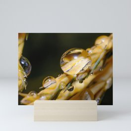 Freezing Rain, Macro Droplets  Mini Art Print