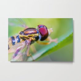 Hoverfly Over the Shoulder, Macro Photograph Metal Print