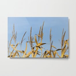 autumn corn field Metal Print