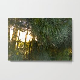 Sun setting behind the tree line - Landscape bokeh background image.  Metal Print