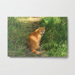 Brown Cat in a Field Metal Print