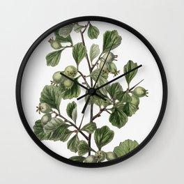 Spathula-leaved thorn from Edwardss Botanical Register (1829-1847) by Sydenham Edwards John Lindley Wall Clock