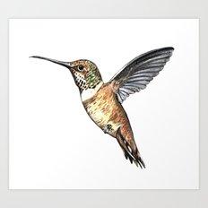 flying hummingbird watercolor sketch Art Print
