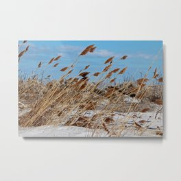 Tame a Wild Wind- horizontal Metal Print
