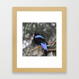 Blue and Black Bird Framed Art Print