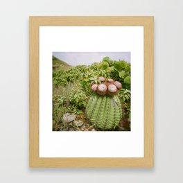 Cactus Flowers on Holga Framed Art Print
