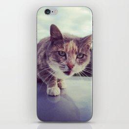 Unbridled cat iPhone Skin