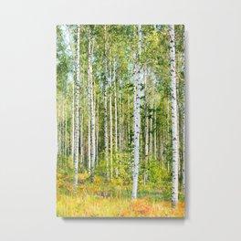 Sunny Day in Beautiful Birch Grove Landscape #decor #society6 #buyart Metal Print