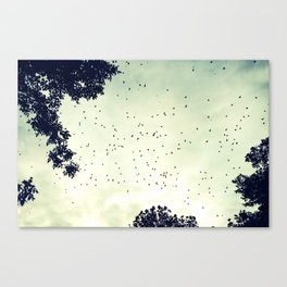 Flock of birds at sunset Canvas Print