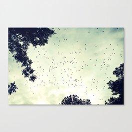 Flock of birds at sunset Canvas Print
