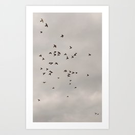Birds play Art Print