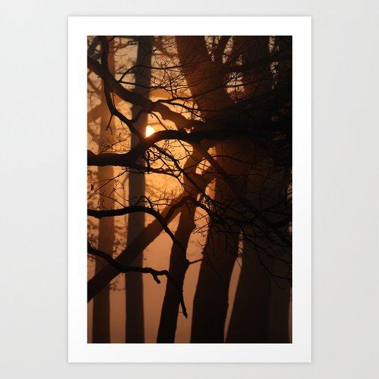 illuminated forest Art Print