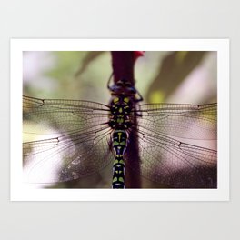Wing Structure Art Print