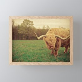 Scottish Highland Steer - regular version Framed Mini Art Print