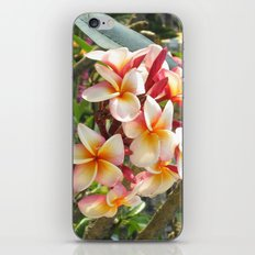 rosa Frangipane iPhone & iPod Skin