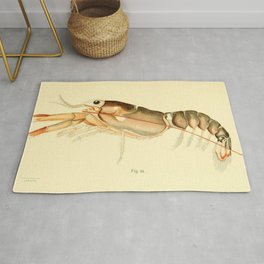 Vintage Baby Lobster Illustration (1895) Rug