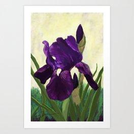 Purple Iris DP150530 Art Print