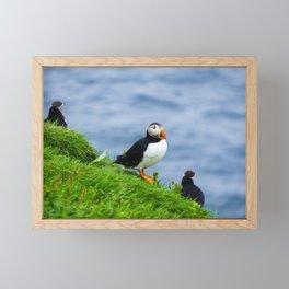 The Puffins of Mykines in the Faroe Islands V Framed Mini Art Print
