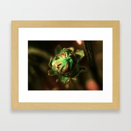 Gold Bud Framed Art Print